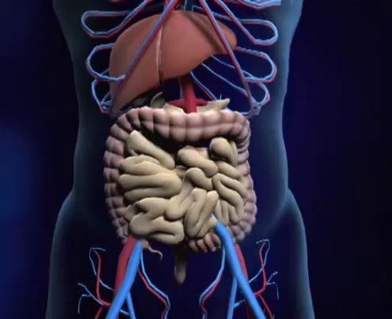 Embedded thumbnail for  Digestive System
