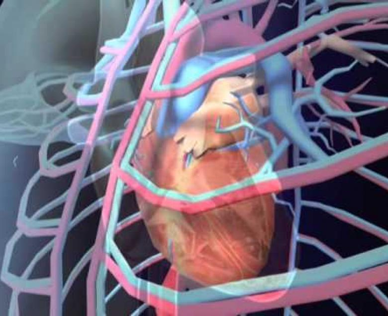 Embedded thumbnail for Circulatory System